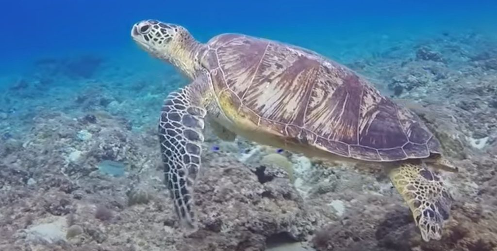 Tortue sous la mer